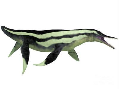 Dolichorhynchops Plesiosaur On White Art Print by Corey Ford