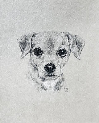 Drawing - Dolly by Risa Kent