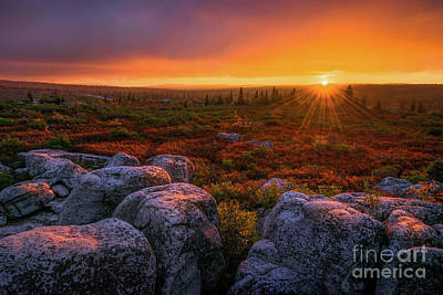 Photograph - Dolly Sods Sunset by Anthony Heflin