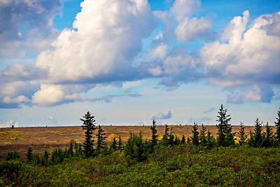 Photograph - Dolly Sods Wilderness Area 4311c by Cynthia Staley
