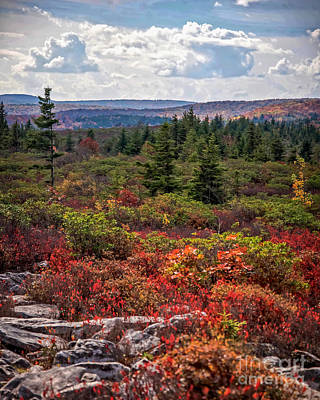 Dolly Sods Wilderness In Autumn 4273 Art Print