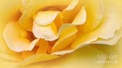 Photograph - Dollys Rose by Jennifer E Doll