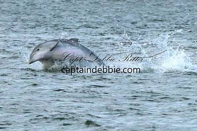 Photograph - Dolphin 9474 by Captain Debbie Ritter