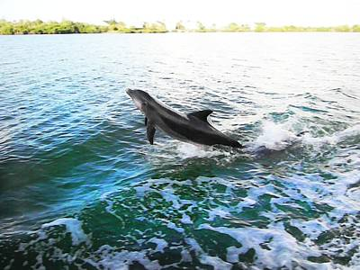 Photograph - Dolphin by Andy Jeter