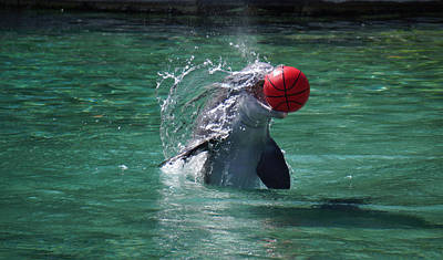 Photograph - Dolphin Catches The Ball by Pamela Walton