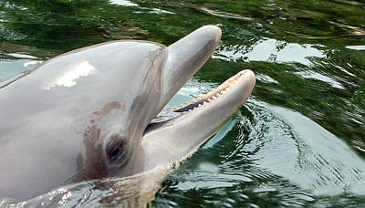 Photograph - Dolphin Charm by Donna Proctor