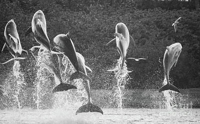 Photograph - Dolphin Dance by Wilko Van de Kamp