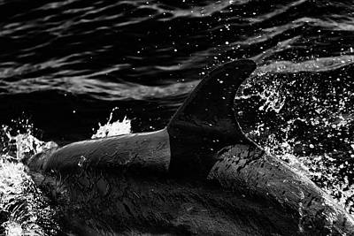 Photograph - Dolphin Dive by Edgar Laureano