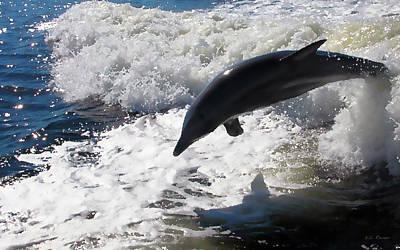 Photograph - Dolphin Jump by Bibi Rojas