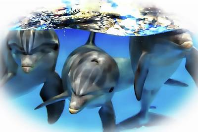 Digital Art - Dolphin Playful Pose by Sheri McLeroy