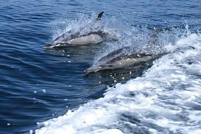 Dolphin Surfing Fantasy Art Print