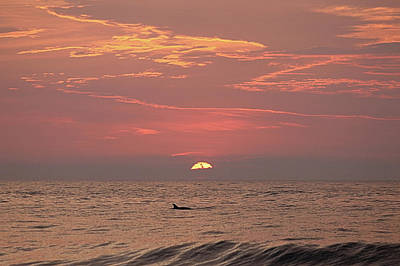 Photograph - Dolphin Swims At Sunrise by Robert Banach