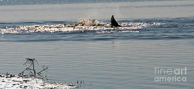 Photograph - Dolphin Tail In The Water by Vincent Billotto