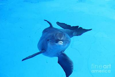 Dolphin Underwater Art Print by Theresa Willingham