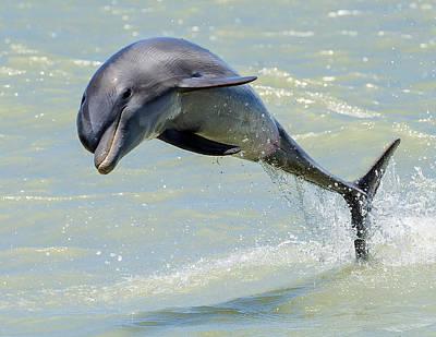 Ocean Mammals Photograph - Dolphin by Wade Aiken