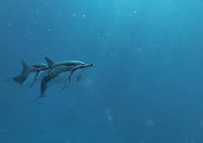 Photograph - Dolphins In Open Water 2 by Art Atkins