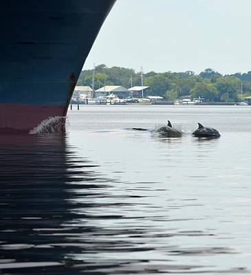 Photograph - Dolphins Jumping By Ship's Bow by Richard Bryce and Family