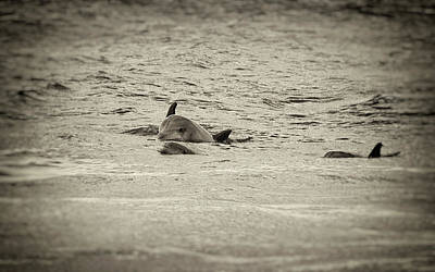 Photograph - Dolphins by Marvin Borst