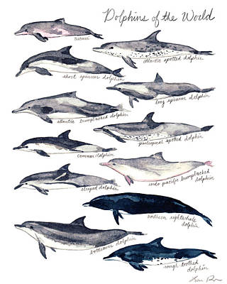 Humpback Whale Painting - Dolphins Of The World Illustrated Chart Nautical Marine Biology Ocean Life by Laura Row