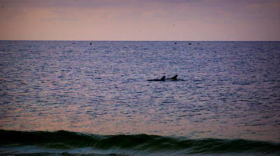 Dolphins Art Print by Paul  Wilford