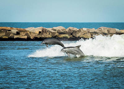 Photograph - Dolphins  by Paula Ponath