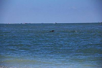 Photograph - Dolphins Playing by Michiale Schneider