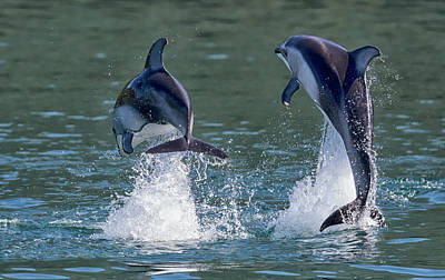 Photograph - Dolphins by Randy Hall