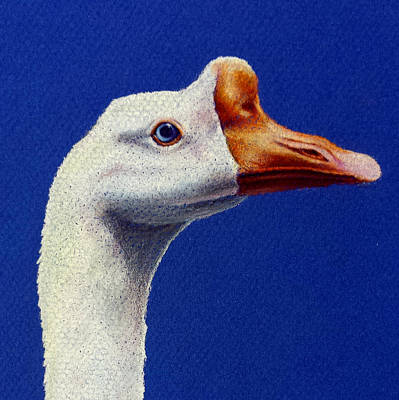 Susan Conner Drawing - Domestic Goose by Susan Conner