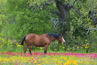 Photograph - Domestic Horse In Field Of Wildflowers by Dave Welling