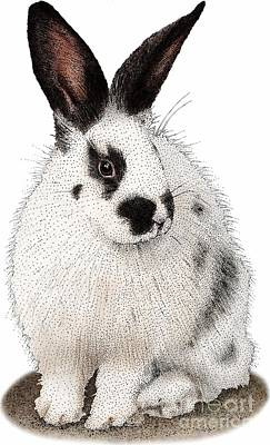 Photograph - Domestic Rabbit by Roger Hall
