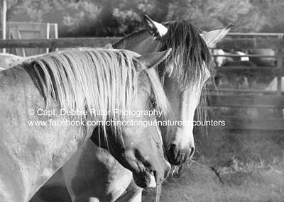 Photograph - Dominance  by Captain Debbie Ritter