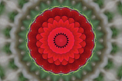 Photograph - Don Juan Kaleidoscope Carnation by Robyn Stacey