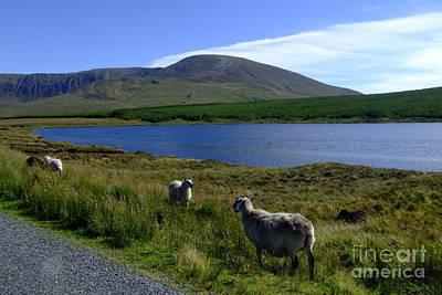 Photograph - Donegal Landscape by Joe Cashin