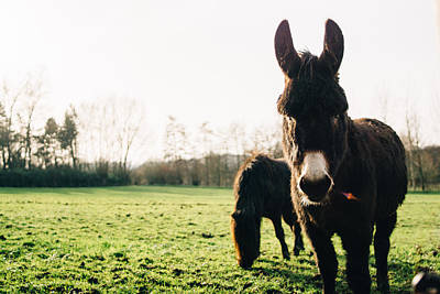Domestic Animals Photograph - Donkey And Pony by Pati Photography