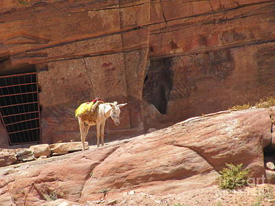 Photograph - White Donkey At Petra by Donna L Munro