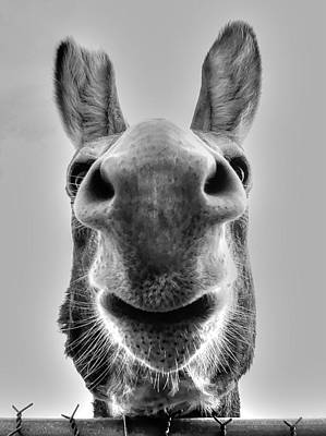 Photograph - Donkey by Charlotte Schafer