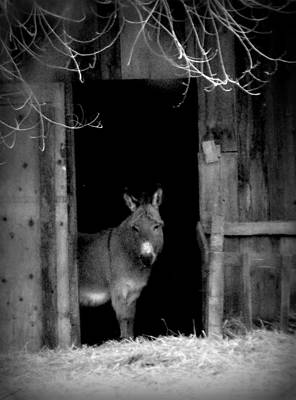 Painting - Donkey In The Doorway by Michael Dohnalek