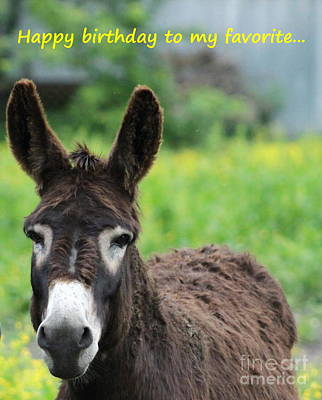 Farmanimals Photograph - Donkey Of Clarence by Tammy Miller