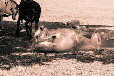 Photograph - Donkey Rolling In Dust by Jacek Wojnarowski