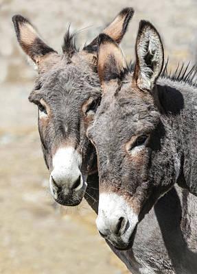 Photograph - Donkey Trouble by Athena Mckinzie