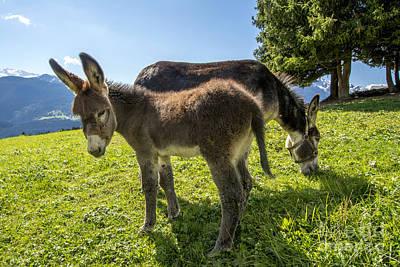 Green Color Photograph - Donkeys In A Meadow by Bernard Jaubert