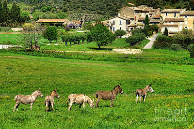 Bucolic Scenes Photograph - Donkeys In Provence by Olivier Le Queinec
