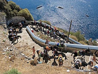 Photograph - Donkeys Of Santorini by S Paul Sahm