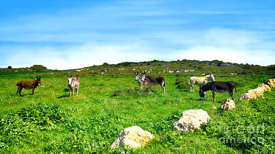 Photograph - Donkeys Under A Blue Sky In Green Hills by Nika Lerman