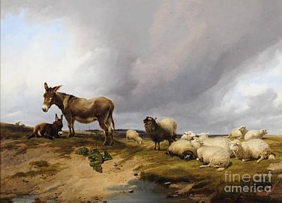 Donkies And Sheeps Art Print