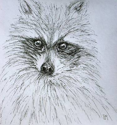 Drawing - Don's Racoon by Pete Maier