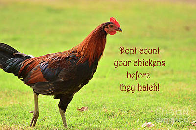 Photograph - Dont Count Your Chickens Before They Hatch by Debby Pueschel