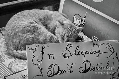 Photograph - Dont Disturb - Sleeping Cat by Dean Harte
