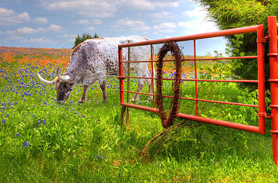 Photograph - Dont Fence Him In by David and Carol Kelly