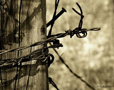 Don't Fence Me In 2 Art Print by Betty Northcutt